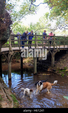 People playing pooh sticks game at The famous Pooh Bridge in the heart of Ashdown Forest Sussex UK at Hartfield - Stock Photo