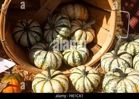 Close-up of small pumpkins - Stock Photo