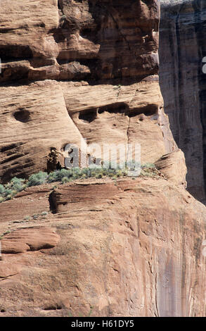 Ruins of cliff building in Canyon de Chelly National Monument, Arizona - Stock Photo