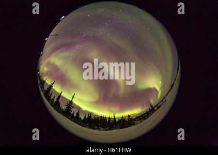 A 360° view of the aurora from Churchill, Manitoba, on March 3, 2016 when the lights started out extensive and fairly - Stock Photo