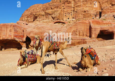 Camels and the Royal Tombs in the rock city of Petra, Jordan - Stock Photo