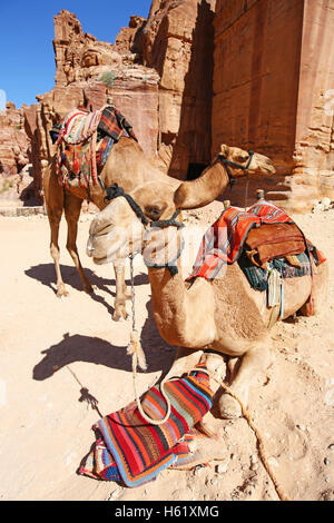Camels in the rock city of Petra, Jordan - Stock Photo
