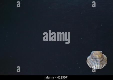 scallop shell on a slate plate - Stock Photo