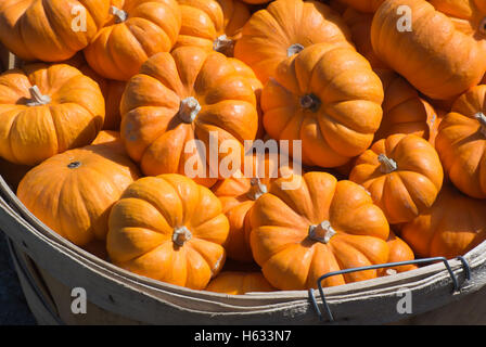 Decorative Mini Pumpkins - Stock Photo
