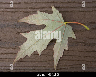 Back side of maple leaf on brown boards with stem curving in upper right corner - Stock Photo