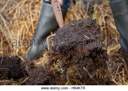 Organic mulch horse manure and straw compost. - Stock Photo