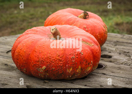 Organic Pumpkins on a Wooden Table - Stock Photo