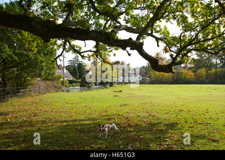 Swan Green, Emery Down, Lyndhurst, Hampshire, England, UK - Stock Photo