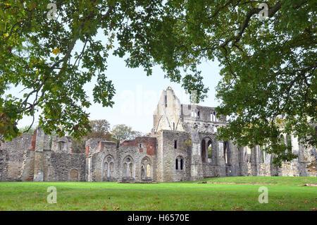 Oak tree framing the Ruins of 13th century Netley Abbey - Stock Photo