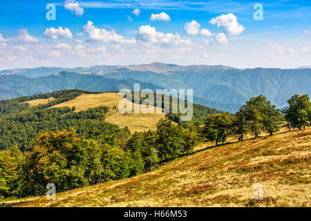 Classic Carpathian mountains landscape in summer. Spruce forest on the edge of hillside over the valley panoramic - Stock Photo