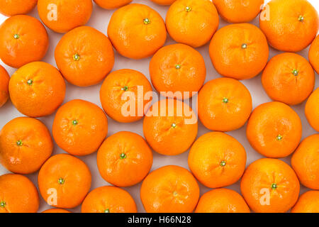 Clementines layed out side by side on white - Stock Photo