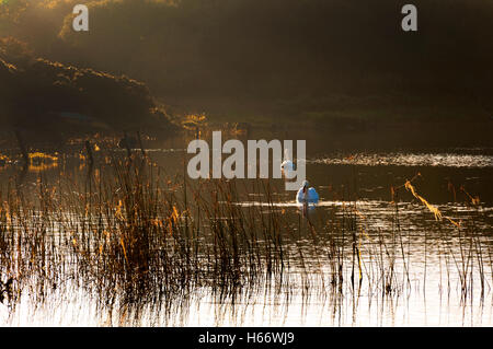 Autumn morning light on Lake Shanaghan, Ardara, County Donegal, Ireland - Stock Photo