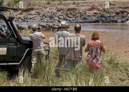 Tourists watching filming wildebeest migration Mara River Masai Mara Kenya - Stock Photo
