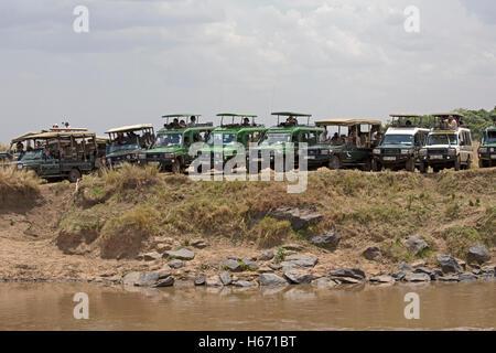 Safari vehicles lined up Mara River to watch wildebeest migration Masai Mara Kenya - Stock Photo
