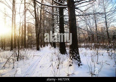 winter trails in the forest - Stock Photo
