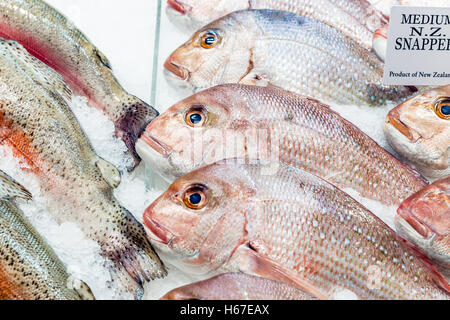 New Zealand Snapper Fish on ice at a fishmongers - Stock Photo