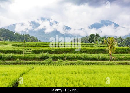 Rice Terraces and volcanic mountains on a rainy day in Jatiluwih, in Central Bali, Indonesia. - Stock Photo