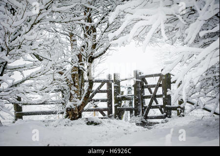 Wintery scene of public footpath going through an archway of snow covered branches leading to fenced gateway. - Stock Photo