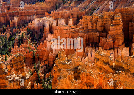The sunlight makes the red rock formations glow as seen from the Sunset Point Overlook in Bryce Canyon National - Stock Photo