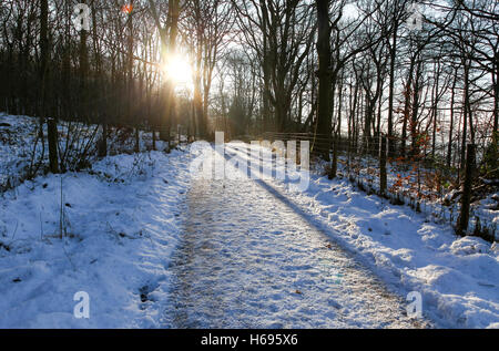 A snow covered track in winter with the low sun shining  through the bare trees casting shadows in Derbyshire England - Stock Photo