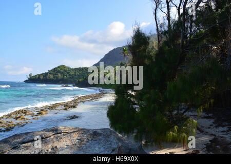 Seychelles forest blue ocean waves clear sky - Stock Photo