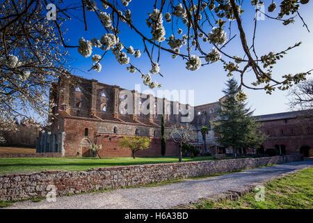 Gothic Cistercian style of Abbey of San Galgano province of Siena, Chiusdino, Tuscany, Italy - Stock Photo
