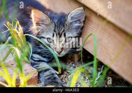Cute little kitten lying in the yard near grunge wooden wall - Stock Photo