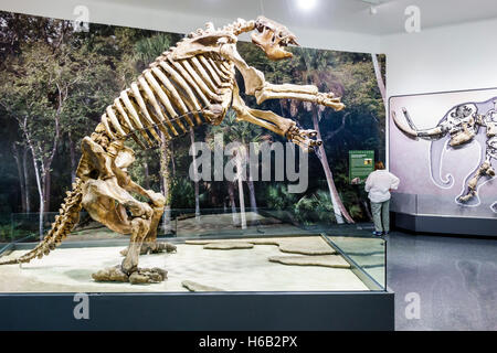 Daytona Beach Florida Museum of Arts & Sciences MOAS inside giant ground sloth skeleton Eremotherium laurillardi - Stock Photo