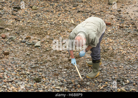 MIddle aged man mudlarking on the River Thames in central London, UK. - Stock Photo