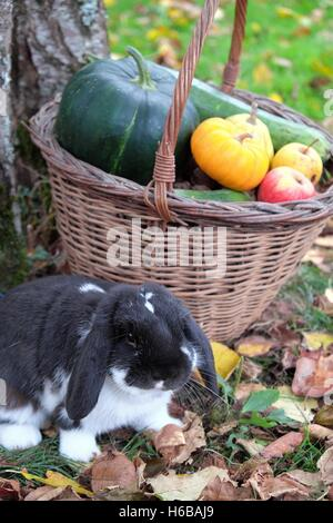 Basket of various autumn vegetables: pumpkin, zucchini, apples, walnuts, chestnuts .... and dwarf rabbit ram, country - Stock Photo