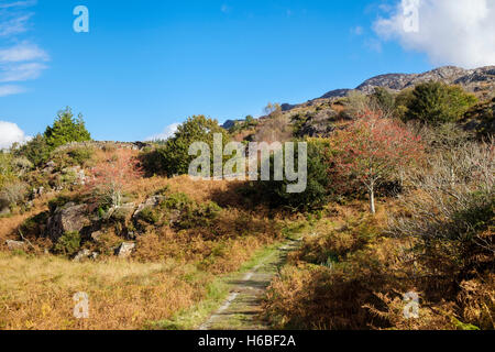 Country footpath in foothills of Cnicht in Snowdonia National Park in autumn. Croesor, Gwynedd, Wales, UK, Britain - Stock Photo