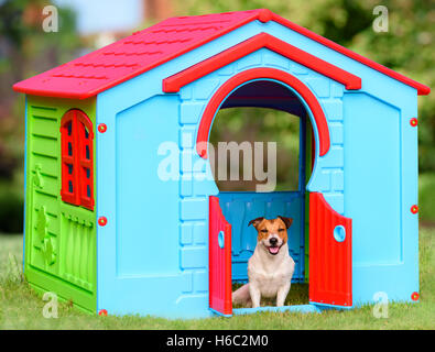 Happy pet sitting in colorful dog house (made from kid playground house) - Stock Photo