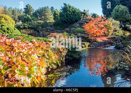The Rock Garden and stream area in Royal Botanic Garden in Edinburgh Scotland in autumn colours & Acer Sieboldianum - Stock Photo