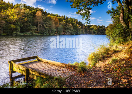 Cannop Ponds in the Forest of Dean, Gloucestershire. - Stock Photo