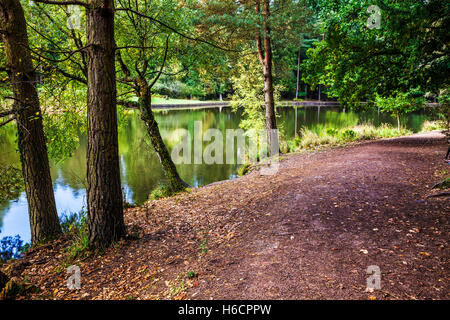 Mallards Pike in the Forest of Dean, Gloucestershire. - Stock Photo