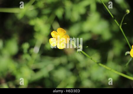 Wild yellow flower available in high-resolution and several sizes to fit the needs of your project - Stock Photo