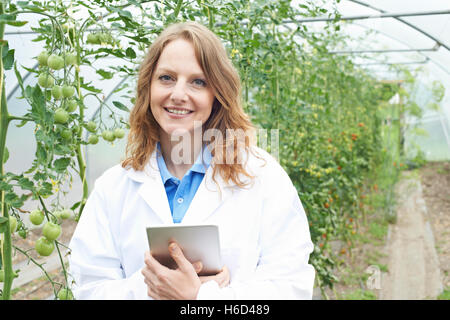 Female Scientist In Greenhouse Researching Tomato Crop - Stock Photo