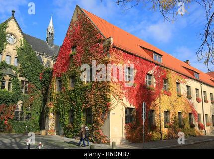 Magdeburg, Deutschland. 23rd Oct, 2016. Wilder Wein klettert am 23.10.2016 in seiner vollen Laubfärbung an einer - Stock Photo