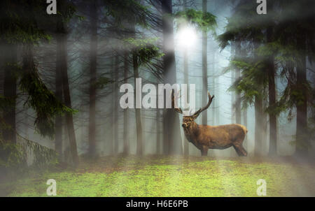 Deer standing in a dreamy misty forest, with beautiful moody light - Stock Photo
