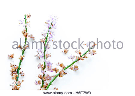 a branch dried orchid on white background - Stock Photo