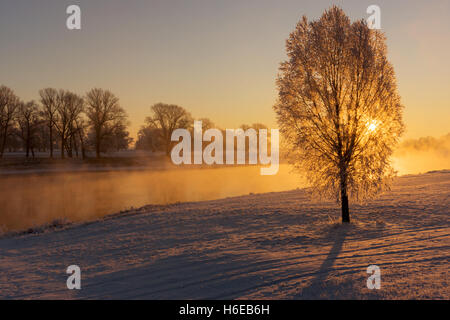 Fog at the Elbe river near Torgau during a winter sunrise. Focus on tree - Stock Photo