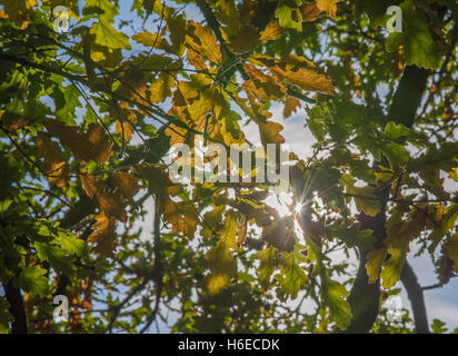 Sun breaks through the leaves as Autumn begins in Birmingham, UK. - Stock Photo