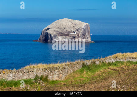 The Bass Rock seagulls and lighthouse pictured from shore - Stock Photo