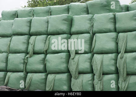Square plastic wrapped bags of silage for livestock winter feed, Hampshire, June - Stock Photo