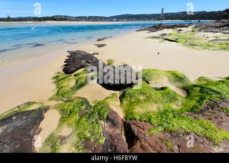 Green Algae on Bar Beach, Merimbula, Sapphire Coast, New South Wales, NSW, Australia - Stock Photo