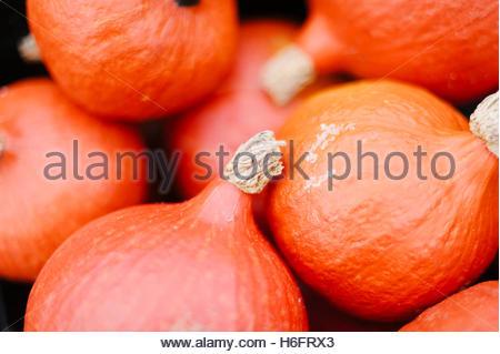 Red Kuri Squashes for sale at a farm shop, Shoreham, Kent, UK - Stock Photo