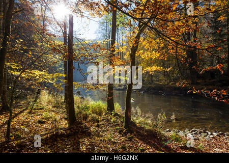 Fluss Ilz im Bayerischen Wald,River Ilz in the Bavarian Forest - Stock Photo