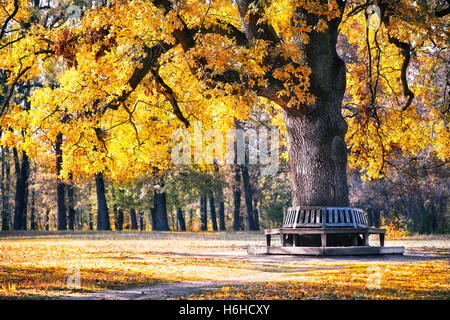 Bench in the park under spreading tree in autumn - Stock Photo