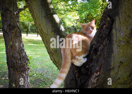 Domestic cat perched on a tree - Stock Photo