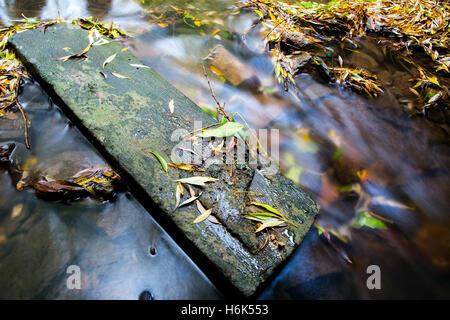 River Churn at City Back Cirencester, Gloucestershire, England, UK - Stock Photo